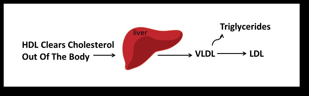 Understanding Cholesterol VLDL
